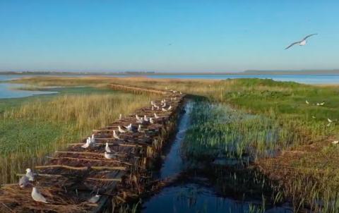 Пернатые из Красной книги Украины нашли новые дома на островах птиц в Николаевской области