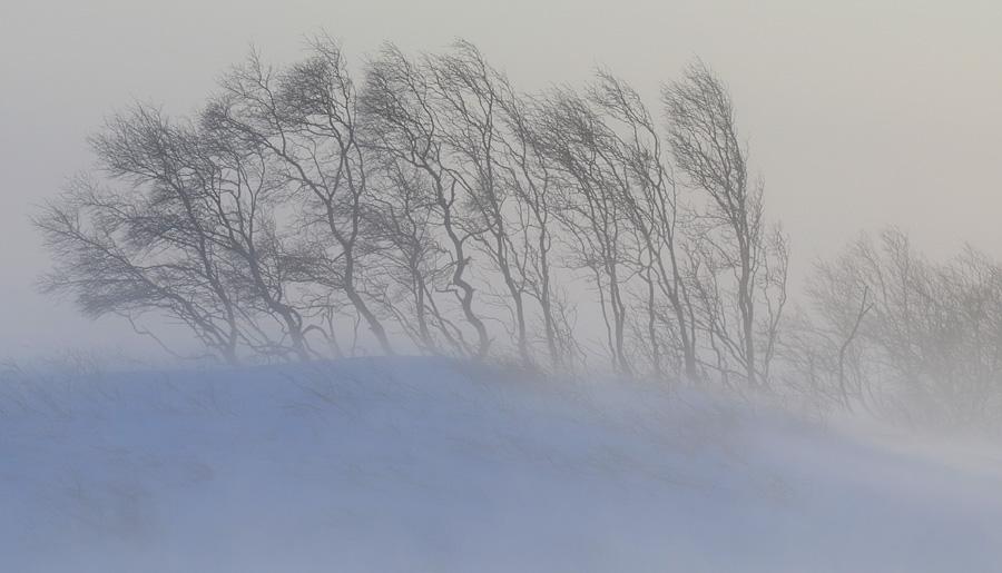 Метель, мороз и гололед: синоптики рассказали о погоде на ближайшие дни    СВІДОК.info