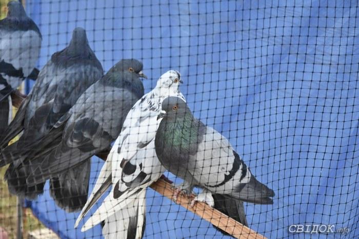 Выставка-ярмарка голубей и декоративных птиц, г.Николаев, 19.10.2019г.